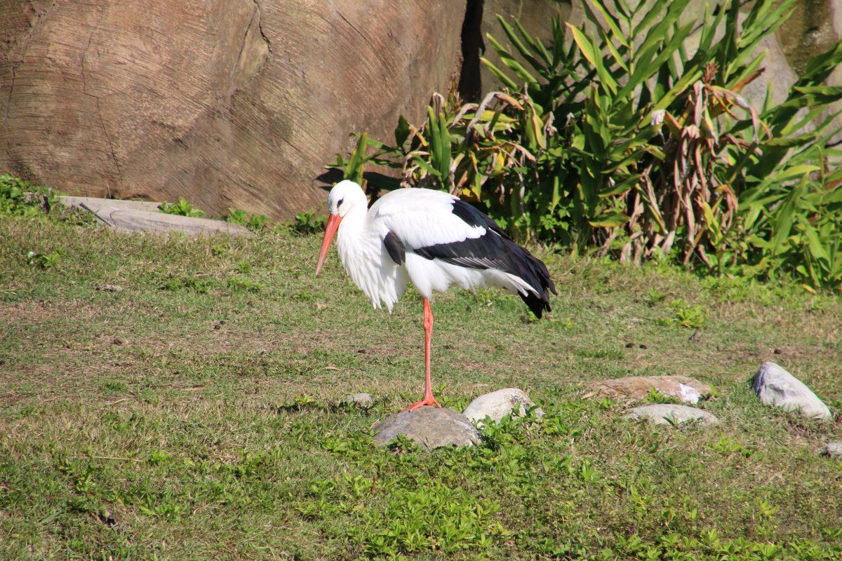 アニマルキングダム 鳥4