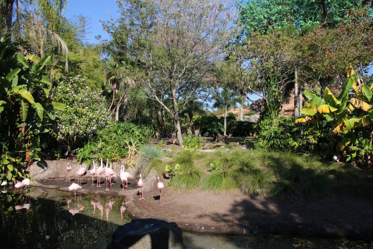 アニマルキングダム 鳥2