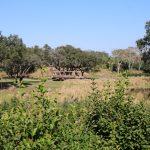 アニマルキングダム キリマンジャロサファリ7