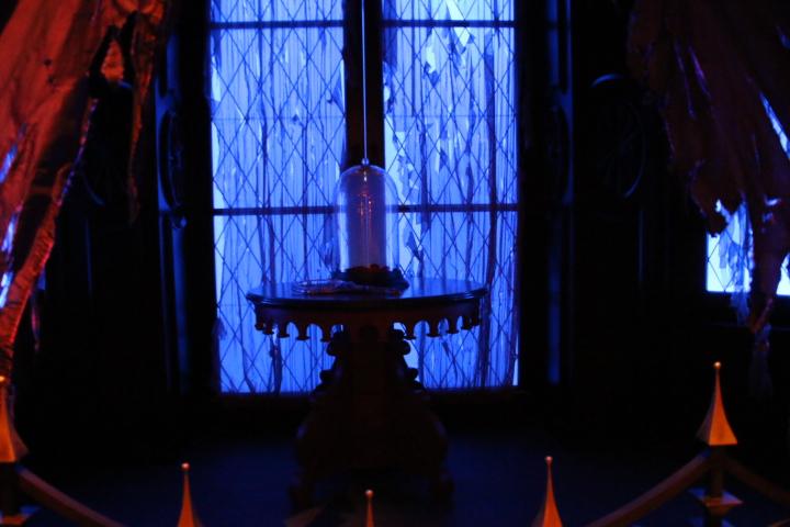 マジックキングダム ビーアワー11